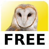 Magic Owl Free