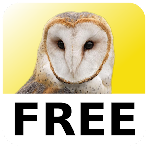 Magic Owl Free for PC and MAC