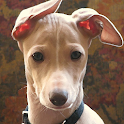 Greyhounds Wallpapers icon