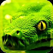 Predatory Snakes LWP