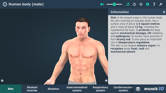 Human body (male) VR 3D- screenshot thumbnail