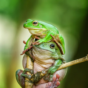 Friendship by Dikky Oesin - Animals Amphibians