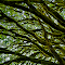 SPIDER LIMBS_edited-1.jpg