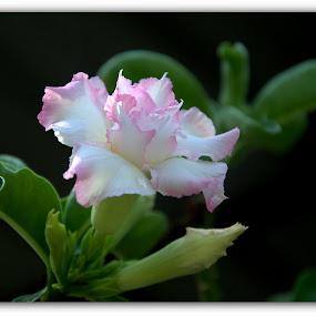 by Lem Kenhook - Flowers Single Flower