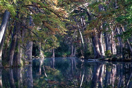 Tranquility by Ron Kreml - Landscapes Waterscapes ( fall, texas, rio_frio, cypress, morning, river, relax, tranquil, relaxing, tranquility )