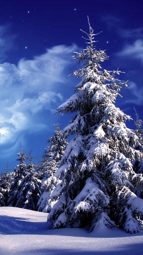 冬季景觀波壁紙