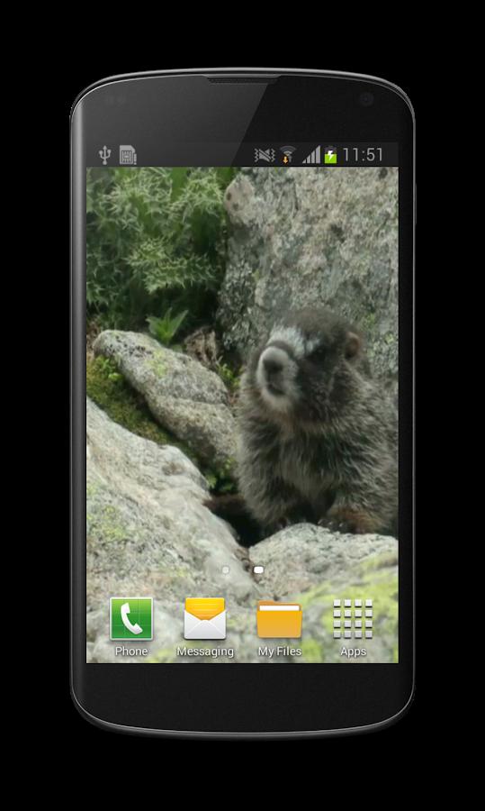 Cute Marmot Free 3D Wallpaper- screenshot