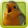 Vogelstimmen-Trainer 2.0.1