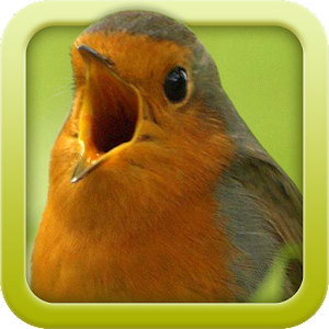 Vogelstimmen-Trainer 2.0