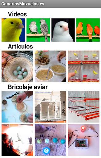 Canarios Mazuelas