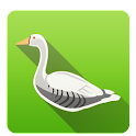 Duck Hunting icon