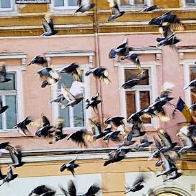by Adian Ad - Uncategorized All Uncategorized ( bird, fly, flight )