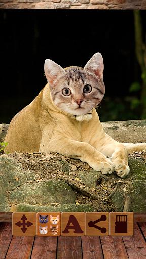 猫脸照片编辑器