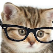Crazy Hipster Cat