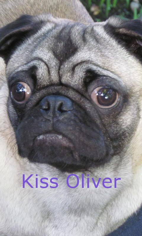 Kiss a Pug - screenshot