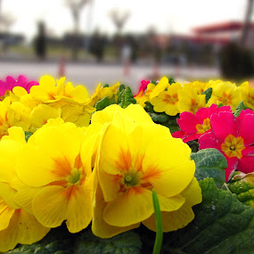 Spring by Suaib Akhter - Nature Up Close Gardens & Produce ( beautiful flower, colorful flower, spring, yellow flower,  )