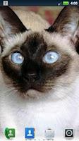 Screenshot of Siamese Cats Live Wallpaper