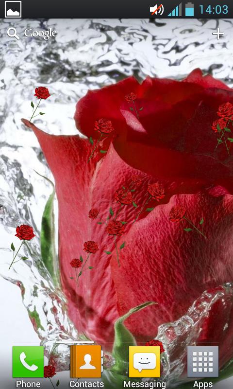 ثيم الحب الجمال Rose Live