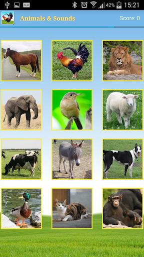 動物和聲音
