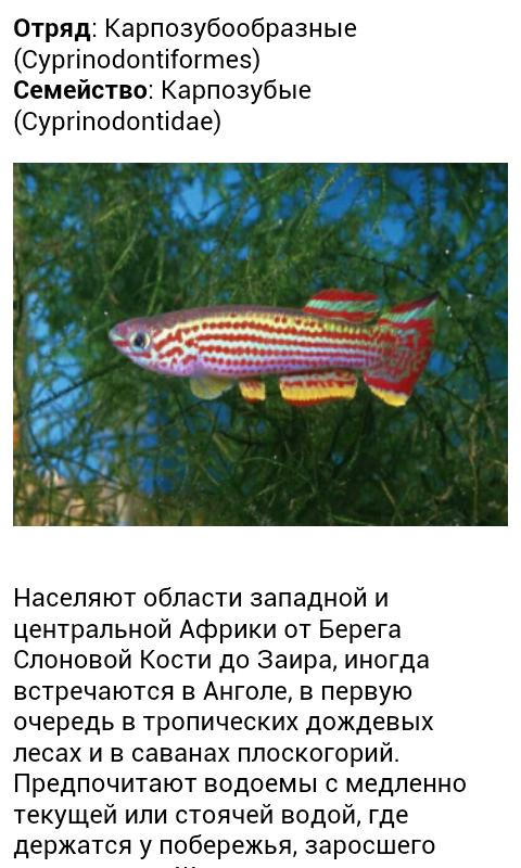 Все виды аквариумных рыб- screenshot