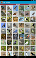Screenshot of Spanish Birds Sounds