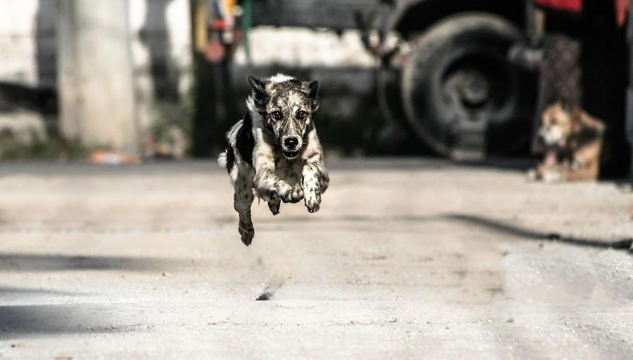 The Run by Avishek Bose - Animals - Dogs Running ( scary, charge, moment, chase, run )