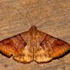 Ophiusini Moth