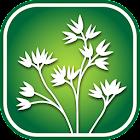 2450 Utah Wildflowers icon