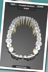 Real Tooth Morphology v3.2