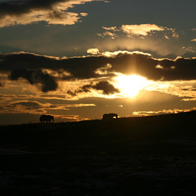 Sunset with Horses by Sandy Davis DePina - Landscapes Sunsets & Sunrises ( field, maine, horses, sunset, snow, evening,  )