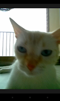Screenshot of Snapcat - Photo app for cats
