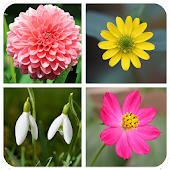 Flower Memory Game