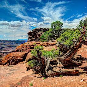 Canyonland NP View by John Larson - Landscapes Deserts ( clouds, desert, cliff, trees, horizon, rocks, river,  )