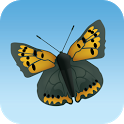 Big Butterfly Count icon
