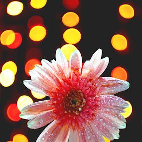 Beautiful Flower by Abhijeet Kumar - Flowers Single Flower ( bokeh, flower )