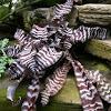 Zebra Snake Plant