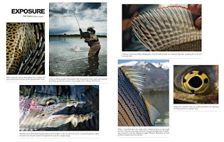 Screenshot of American Fly Fishing