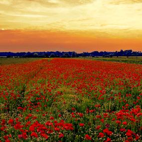by Branka Radmanić - Landscapes Prairies, Meadows & Fields
