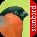 Vogel Id - Vögel im Garten icon