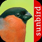 Vogel Id - Vögel im Garten
