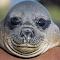 Antarctica_Wildlife_25.jpg