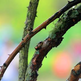 by Wibi Prayogo - Nature Up Close Trees & Bushes