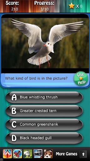 Bird Species Quiz HD