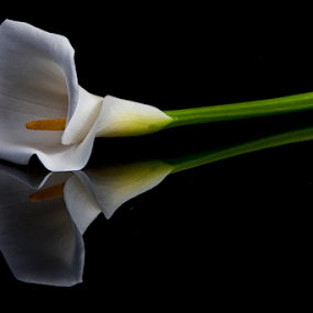 Alcatraz and reflections by Cristobal Garciaferro Rubio - Flowers Single Flower