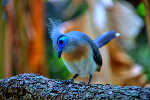 A bird at the Animal Kingdom in Orlando, Florida.