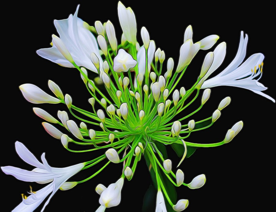 Glow Bloom by M & D Photography - Flowers Single Flower