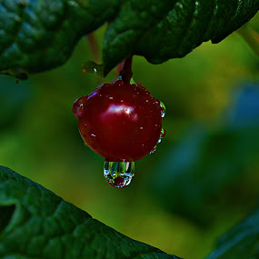 i kap by Jelena Puškarić - Nature Up Close Natural Waterdrops (  )