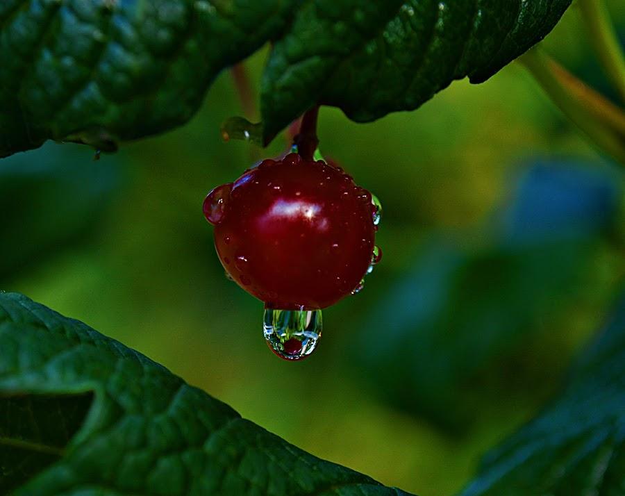 i kap by Jelena Puškarić - Nature Up Close Natural Waterdrops (  )