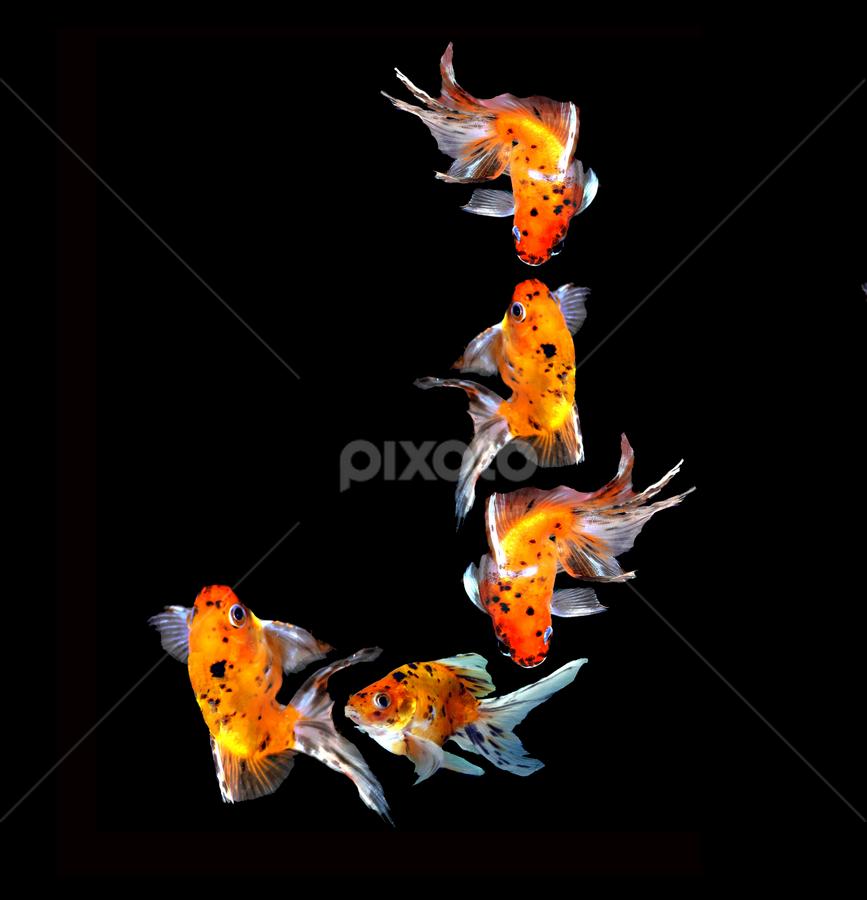 Goldfish J by Janna Morrison - Typography Single Letters ( j )