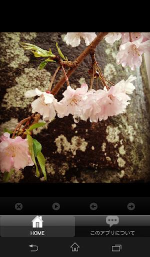 玩攝影App|四季の画像集免費|APP試玩
